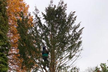 Bäume | Gehölzpflege